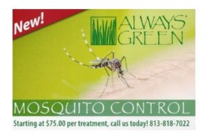 always Green mosquito control offering post card
