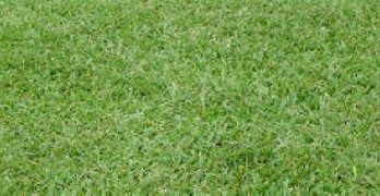 healthy-green-turf