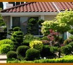 Always Green - Tree and Shrub Care