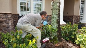 Always Green technician delivering Arborjet service for palm care